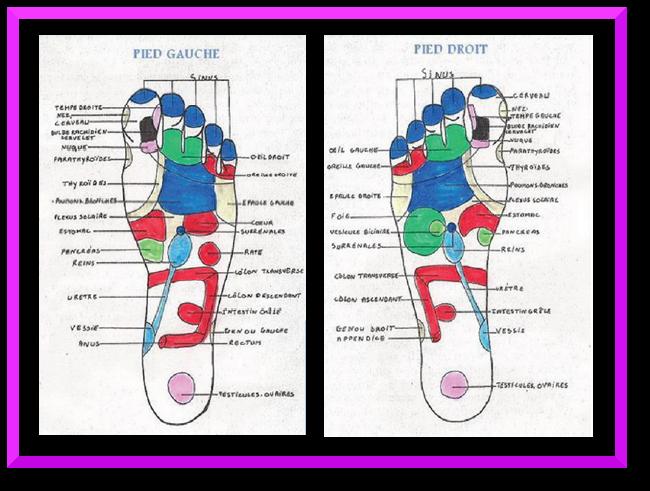 les 2 pieds-zones de réflexologie