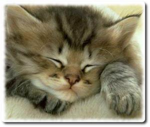 Chat qui dort - les animaux sont plus intelligents que nous
